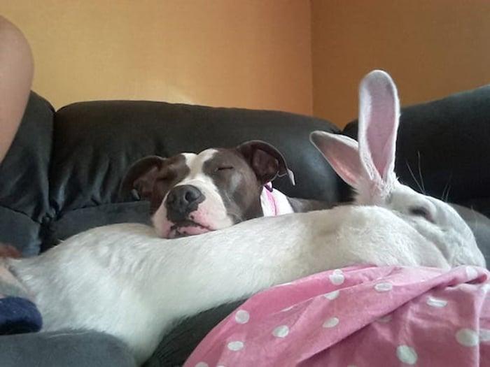 Perro y conejos son mejores amigos