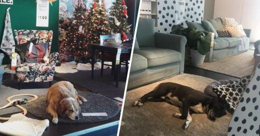Cover Mueblería abre sus puertas a perritos de la calle para que no sufran frío