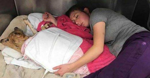 Cover Veterinaria duerme junto a perrito QUEMADO para hacerlo sentir protegido