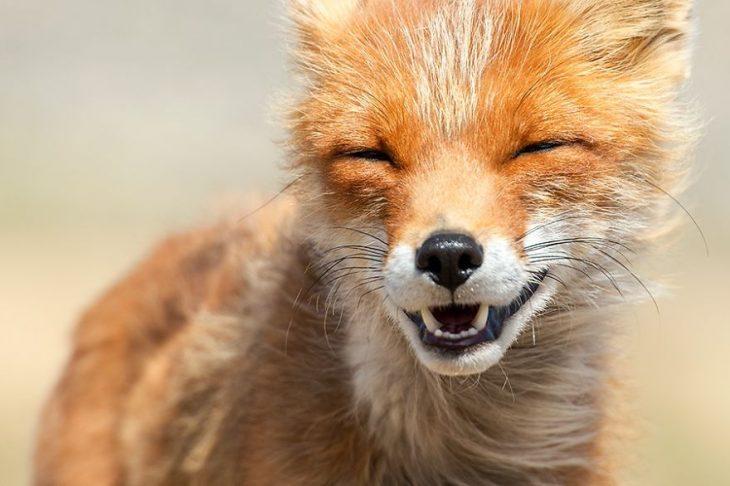 zorrito sonriendo