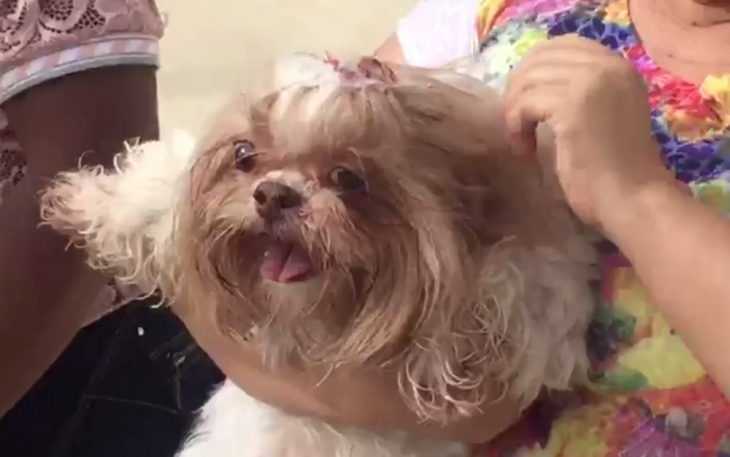 Perro cae de cuarto piso pirotecnia
