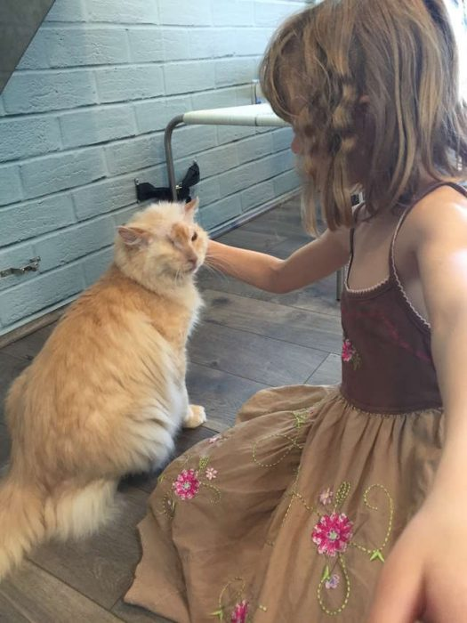 Tommy gatito echaron ácido en la cara