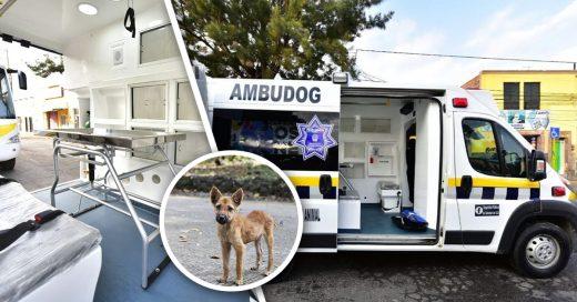 Cover México tendrá su primera ambulancia para atender a perros atropellados o maltratados