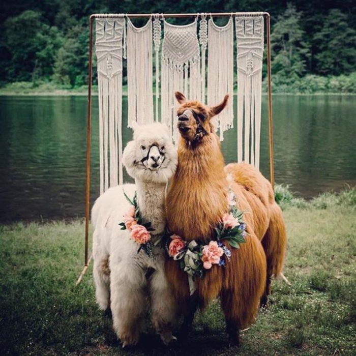 boda de llamas