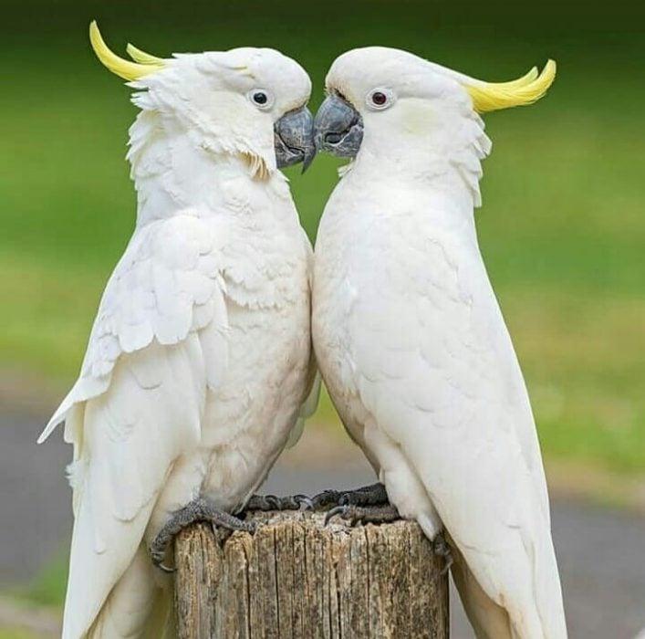 dos pájaros blancos