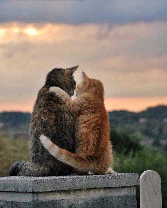 gatitos se abrazan