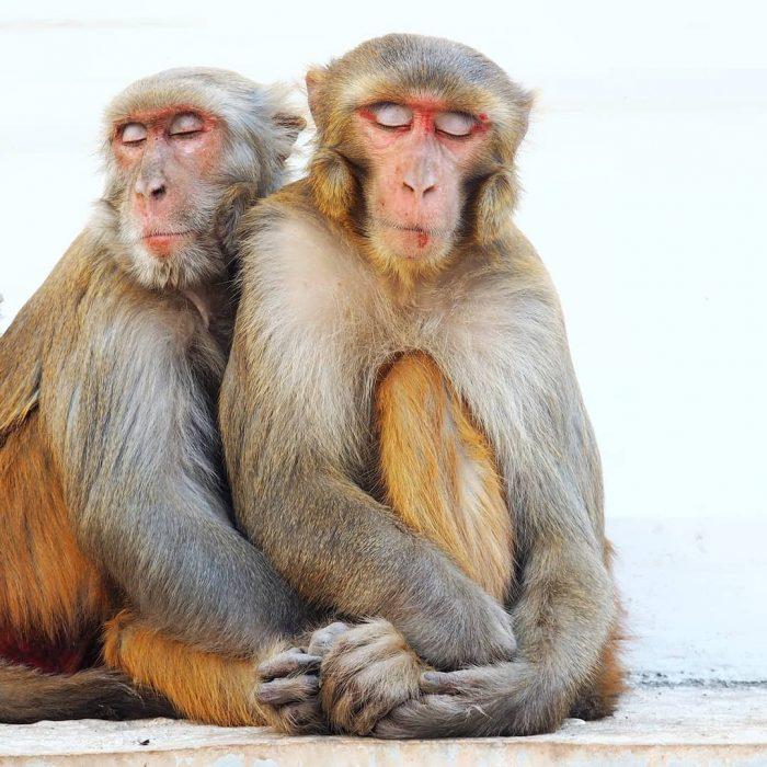 primates abrazándose