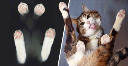 Cover Divertidas fotos de gatitos jugando en mesas de vidrios