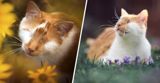 Cover Conoce a Kuzao, un gatito sin ojos que se robará tu corazón