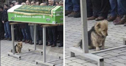 Cover Su dueño murió, pero este fiel perro visita su tumba todos los días