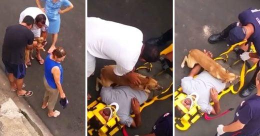 Cover El dueño de este perrito se accidentó y su cachorro hace de todo por protegerlo