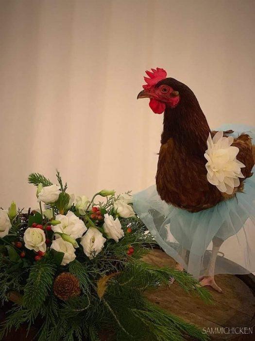 gallina con vestidito