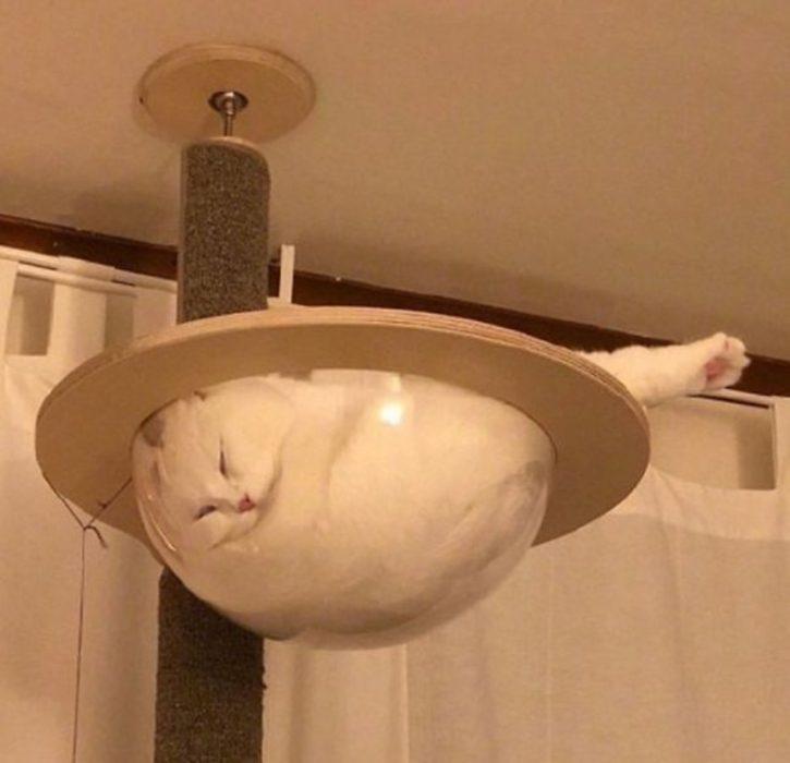 gato líquido