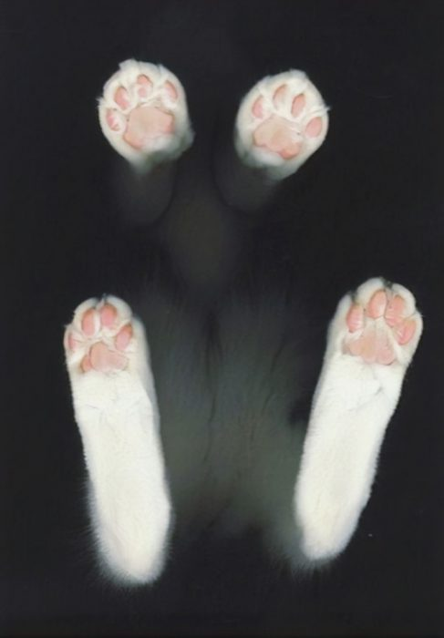 patitas de gato