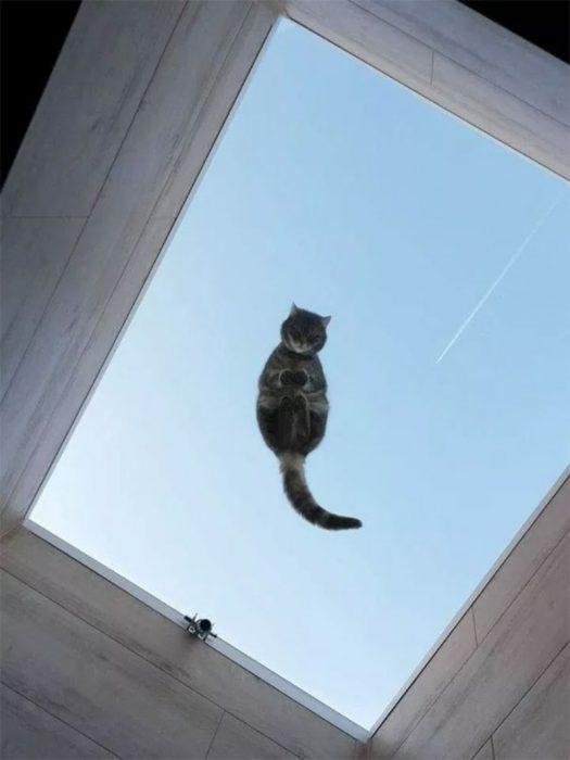 gatito vigía