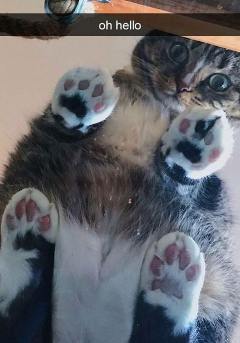gatito saludando