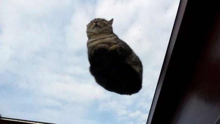 gato y nubes