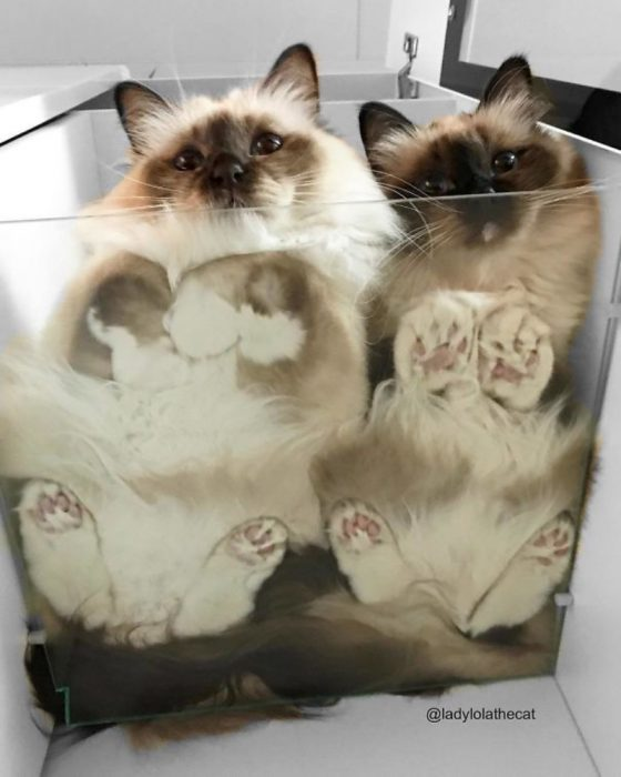 hermanas en vidrio