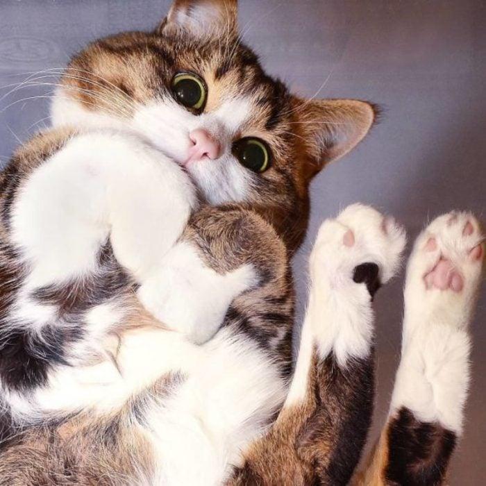 gatito bonito