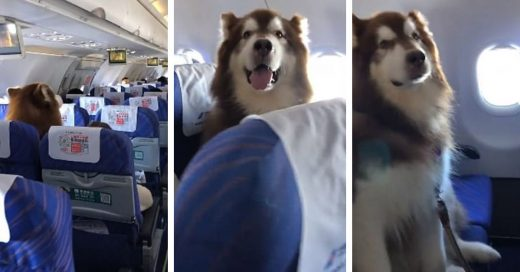 Cover Le permitieron volar en un asiento junto a su dueño discapacitado. Se portó mejor que cualquier niño