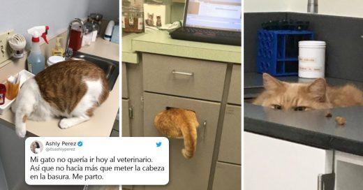 Cover Compartió una foto de su gato escondiéndose del veterinario, e internet respondió con sus propias y divertidas fotos