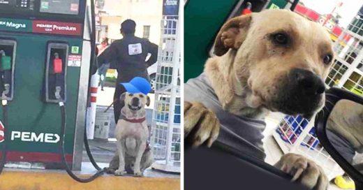 Cover Adoptan a Randy, un perrito de una gasolinera