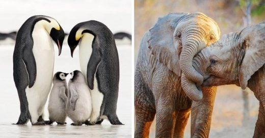 Cover Parejas de animales que te harán volver a creer en el amor