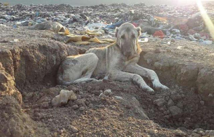 perro en un basurero