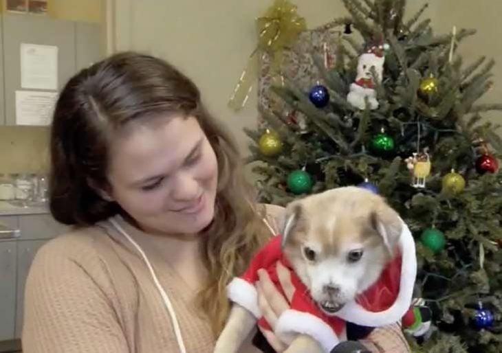 mujer cargando a un perro