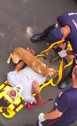 perro ambulancia paramédicos