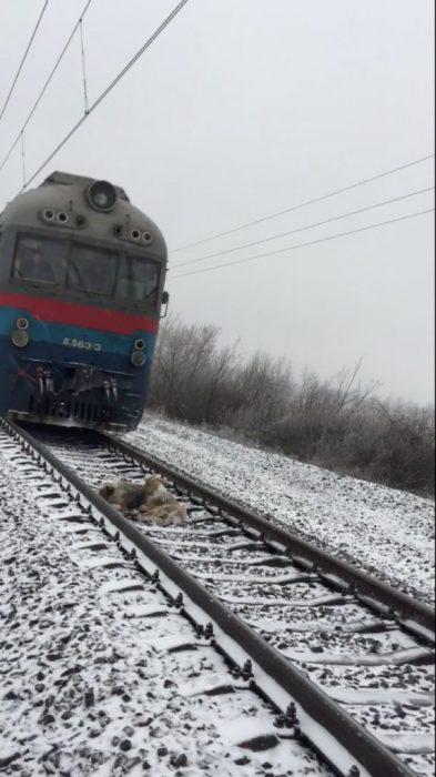 perritos y tren