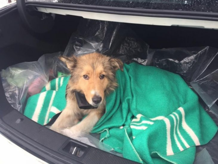 perrito en cobija