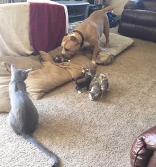 perro gato y gatitos