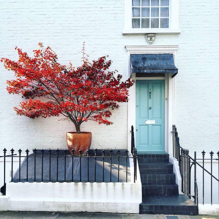árbol rojo, puerta azul