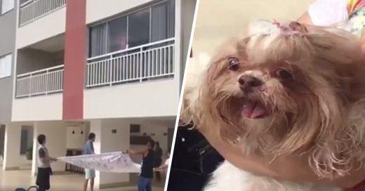 Cover Perro se desespera por el ruido de los cohetes y cae de un cuarto piso mientras los vecinos se reúnen para atraparlo
