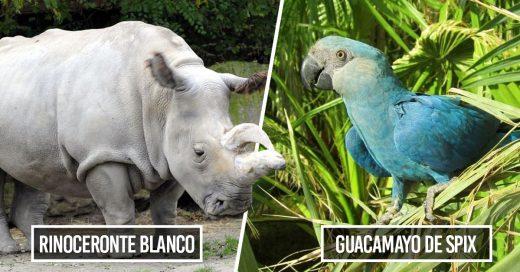 Cover Estas fueron las especies que se extinguieron en 2018