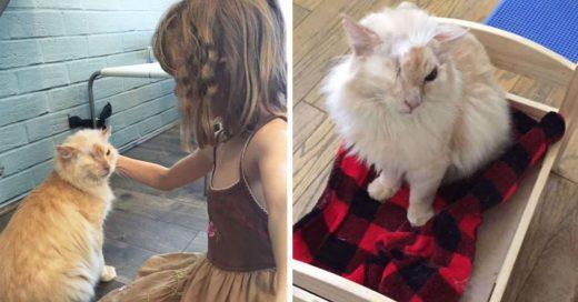 Cover Le echaron ácido en la cara por pedir comida, pero el gatito todavía confía en las personas.