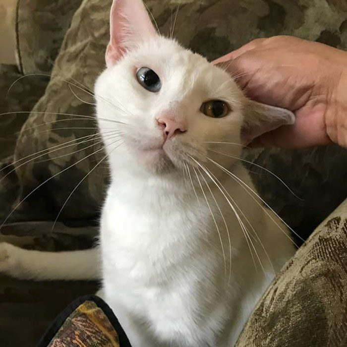 Gato rescatado sorprende a todos cuando abre los ojos