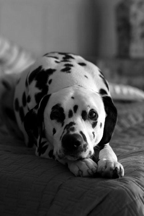 enseñanzas caninas