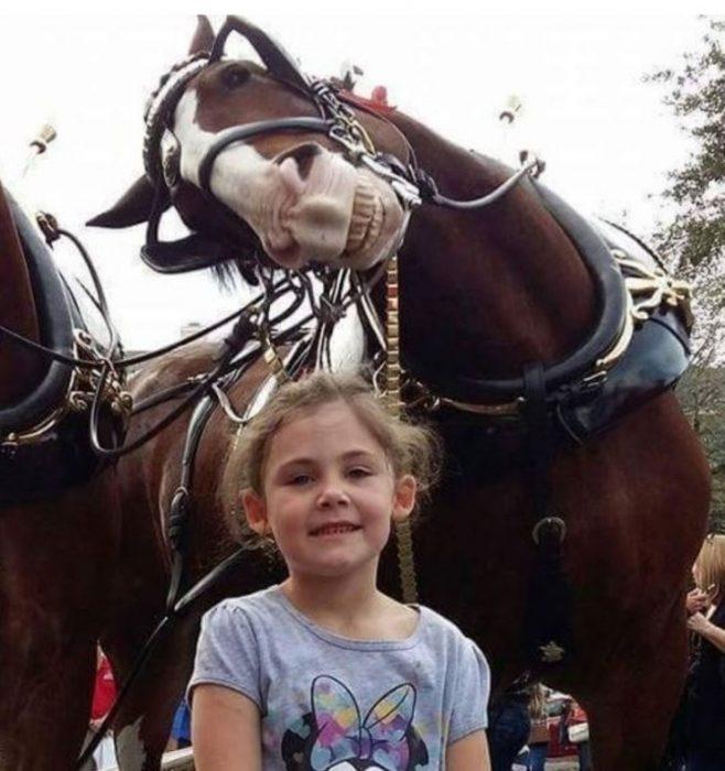caballos sonrientes