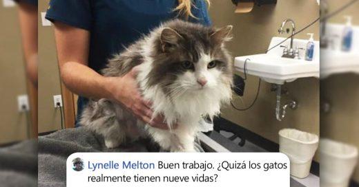 Cover Gato se recupera milagrosamente después de estar congelado
