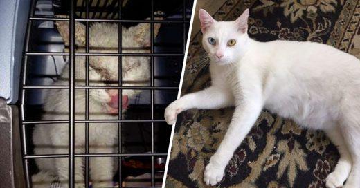 Cover Pensaron que este gatito enfermo y lleno de sarna era ciego, pero sorprendió a todos
