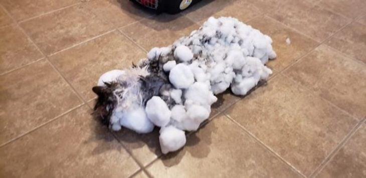gatito congelado