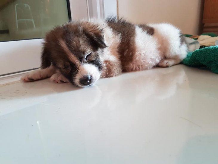 perrito recostado