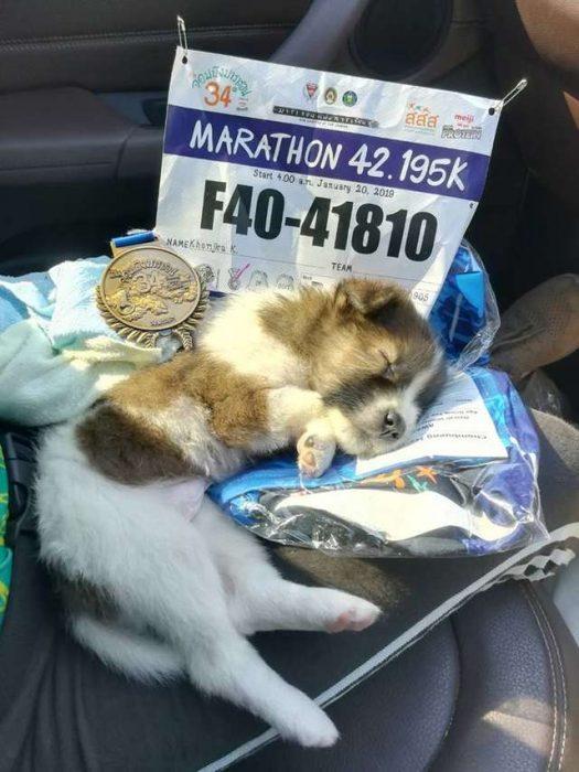 cachorro y número de corredora