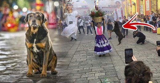 Cover Mazapán, el perrito oaxaqueño que bailó hasta hacerse viral