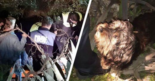Cover Hallan a un anciano caído en un barranco gracias a los ladridos de su perro