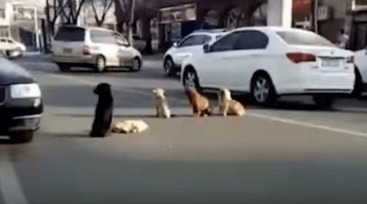 perritos protegiendo un cuerpo
