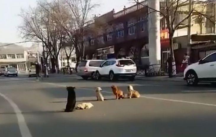 perritos en la calle