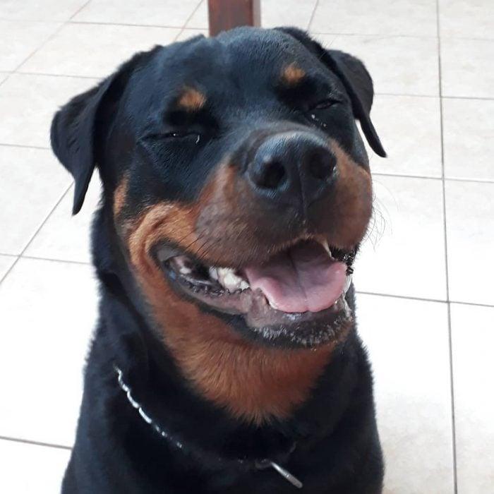 perrito sonriendo
